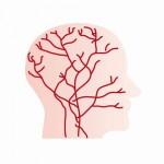 ミノキシジルの発毛効果は血管拡張作用?本当のメカニズムは毛包の成長だった!