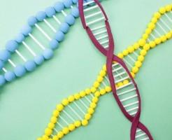 AGA(男性型脱毛症)遺伝子検査キット(AGAドッグ)で薄毛治療