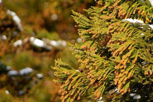 髪の花粉対策は帯電防止